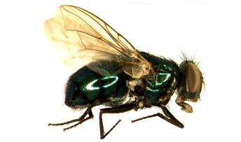 Fly Control & Prevention – City Pest Control